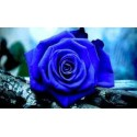 ROSA ETERNA COLOR AZUL OSCURO 60 cm